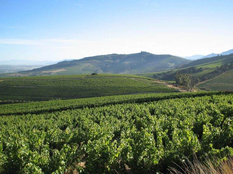 Five Cape winelands farms awarded Conservation Champion status