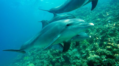 Dolphins share some personality traits with humans