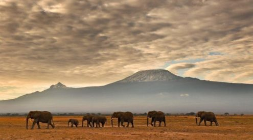 Increasing land use could turn Mount Kilimanjaro into an ecological island
