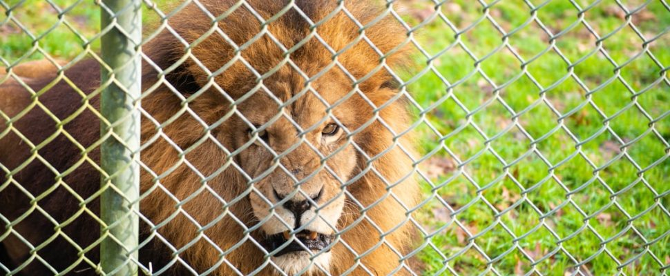 South Africa tops exhibitor list at US trophy hunting convention