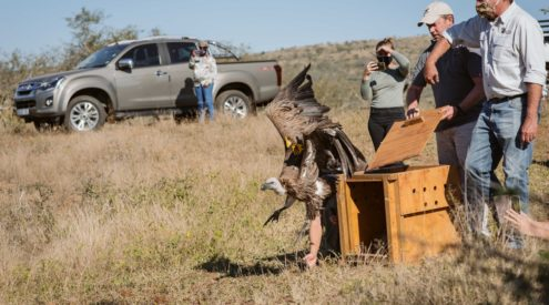 Musicians to host online concert for vulture conservation