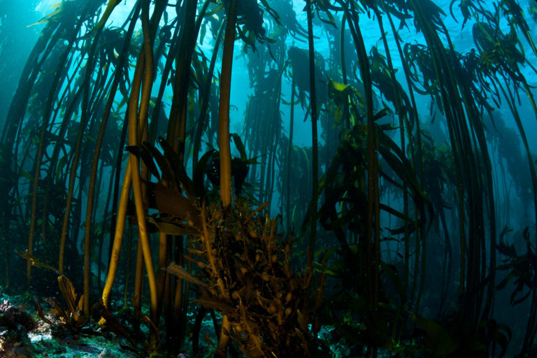 Keeping up with the kelp forests of Simon's Town