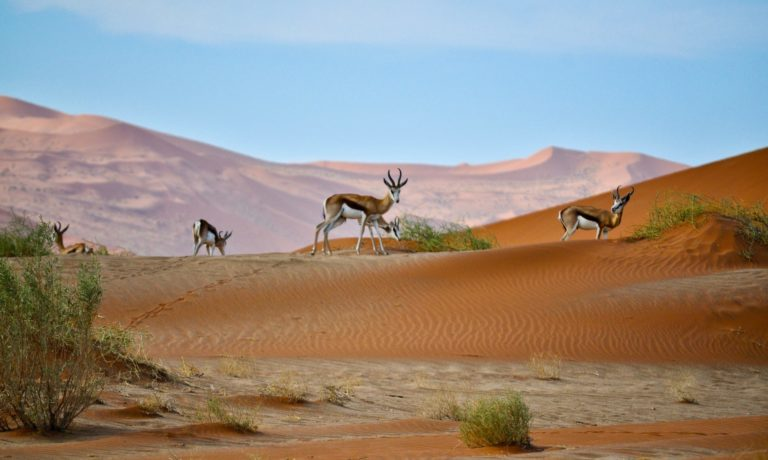 What to know before travelling to Namibia