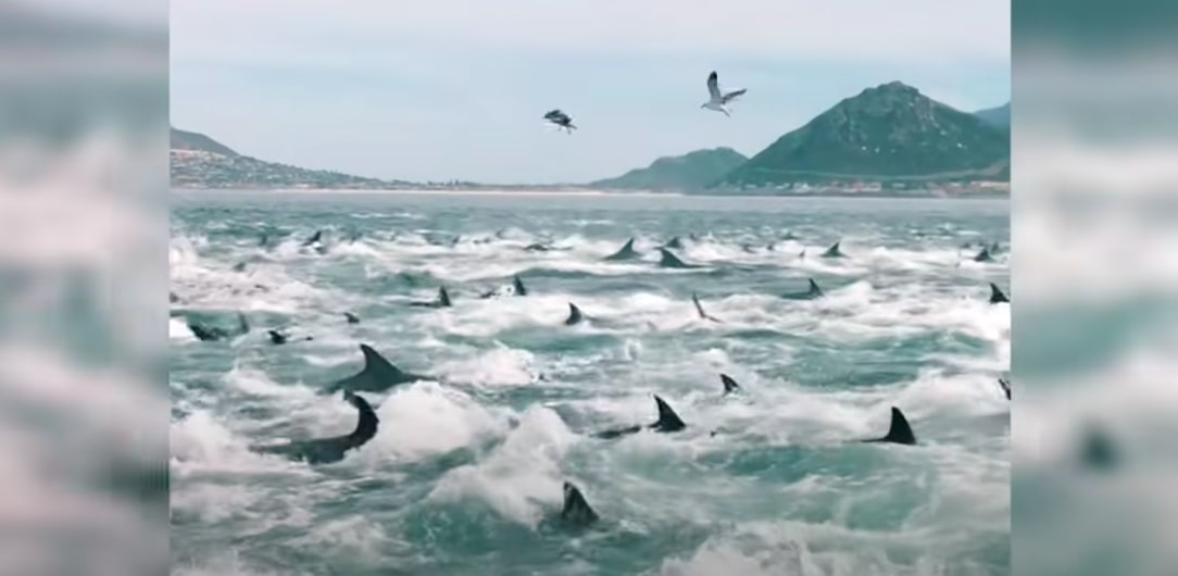 Incredible sighting of dolphin pod and whale feeding in Cape Town