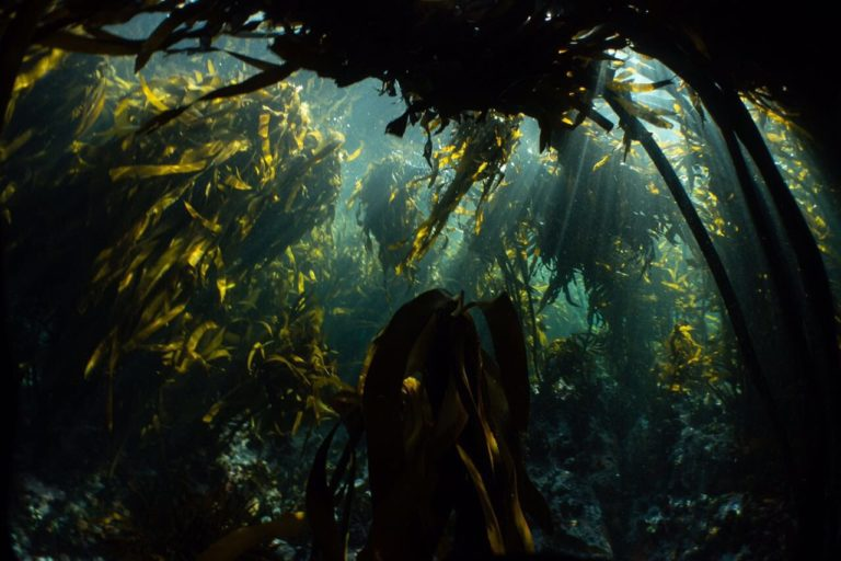 Bloomberg's 'new' Seven World Wonders no 5: Kelp Forests, South Africa