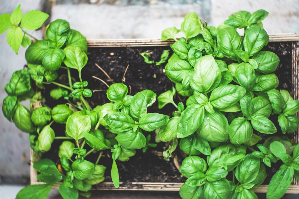 7 essential and easy-to-grow herbs to plant this spring