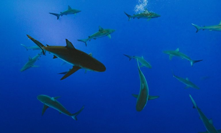 Save Our Seas Foundations funds 61 projects in 2021