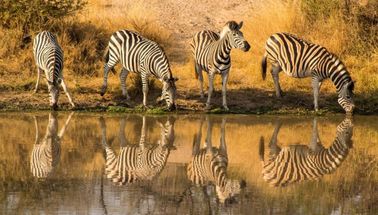 Conservation Continues Between South Africa and Mozambique